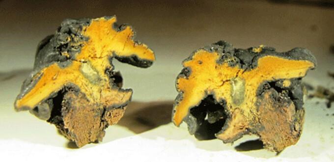 Chlorostroma vestlandicum