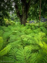 IMG_8906-12 (Reynaldo Mondragon) Tags: flowers gomez farias selvatic vegetation reymondragon