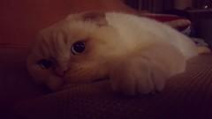 Clyde    #cat #cats #meow #gatto #katze #katzen #chat #flin #koka #kot #gatti #gatos #kucing #pisic # #maka # # # # # # # # # # # # # # (egorvel) Tags:  koka  gatto cats maka katzen  katze meow       pisic flin gatti kucing kot gatos  chat      cat