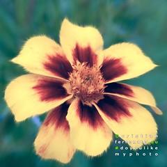 fiore 1 (Cristian Ferronato) Tags: e se questo lunedi doyoulikemyphoto si dedicasse alla pittura digitale art digitalpaint fiore flower