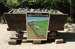 SALTBURN-BY-THE-SEA, NORTH YORKSHIRE (meddie / aka Gramps) Tags: saltburn skelternbeck flowers floral green n red yellow blue pink flower garden tree