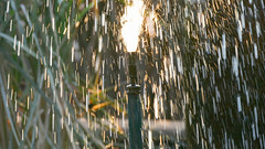 water games (Stefan Giese) Tags: namibia afrika africa okaukejo wasser reflection springbrunnen tropfen drops panasonic fz1000