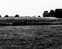 (Nico_1962) Tags: leica m8 summicron nederland bw zwartwit landschap landscape rangefinder manualfocus primelens leicam thenetherlands summicron50mm