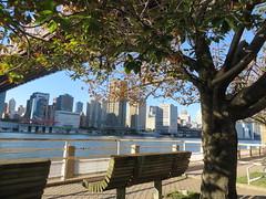 Around New York: Roosevelt Island, Sep. 2016 (yapima1) Tags: newyork rooseveltisland queensborobridge 59thstreetbridge edkochqueensborobridge bridge skyline cityview