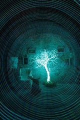 Electroluminescent  tree installed (- Hob -) Tags: longexposure light lightpainting tree art perception movement time space led memory nophotoshop elwire 3588 singleexposure sooc stephensonworks timeandmind