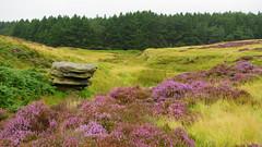 Upper Burbage Brook (itscosmicjim) Tags: england tree landscape rocks heather derbyshire jimbell hathersagemoor pentaxk5