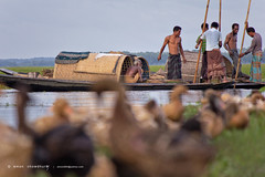 sailing off (emon chowdhury.) Tags: canon sylhet bangladesh srimongal 55250mm canon550d hailhoar