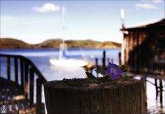 Boatshed Flower (Dan @ DG Images) Tags: flower dan canon log with background boatshed goodwin planted 60d pommedan dgimages