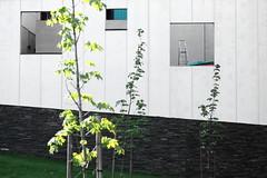 Ladder (mkel) Tags: sunlight tree window wall finland concrete helsinki ladder hermanni