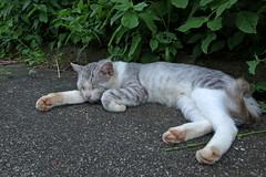 R0014198_1 (anchor recess(lacking of Fe)) Tags: animal cat dam creature  mie  nabari    shorenji   shorenjidam  shorenjilake