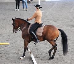 Lusitano Feira (s11_8) Tags: horse feira pferd lusitano hst