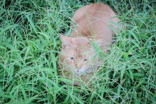 Today's Cat@2012-09-21