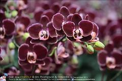 1Day-trip-Jim-Thompson-Farm&Dasada-Gallery_E12663461-052