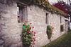 (A Great Capture) Tags: ald ash2276 ashleyduffus queenston on ontario canada wall windows fall autumn leaves niagara lake stone flowers ashleylduffus wwwashleysphotoscom ig