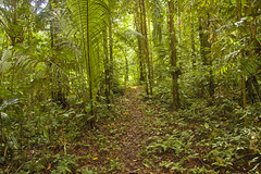 (Laura Colomé) Tags: trees green peru palms rainforest selva palmeras jungle amazonia tambopata madrededios