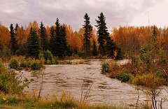 Alaska Autumn Message (Explored) (MarculescuEugenIancuD5200Alaska) Tags: alaska anchorage