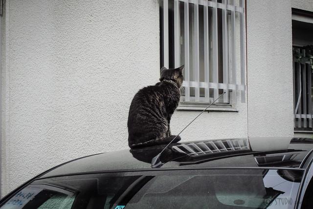 Today's Cat@2012-09-30