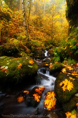 Tranquility of Fall (Darren White Photography) Tags: travel autumn fall nature colors oregon creek forest landscapes nikon stream seasons hiking scenic trails calm pacificnorthwest serene pnw columbiagorge tranquil columbiarivergorge d300 outdoorphotography portlandphotography oregonlandscape darrenwhite outdoorphotographer vancouverphotography northwestlandscapes darrenwhitephotography northwestphotographer