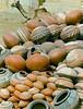 India (David-Gifford) Tags: india ceramics pots clay jaipur rajasthan