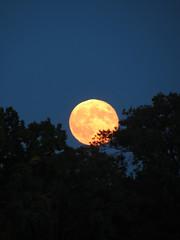 Harvest Moon (deu49097) Tags: autumn moon