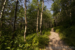 """Swiftcurrent Trail • <a style=""""font-size:0.8em;"""" href=""""http://www.flickr.com/photos/63501323@N07/8048277682/"""" target=""""_blank"""">View on Flickr</a>"""