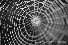 240.366 (Laura L. Ruth) Tags: abstract blur dof bokeh web spiderweb 100l natureycrap lauraruth
