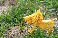 Lion (tryingtofoldsumthing) Tags: nature origami tissue lion double cp mane takeda wetfolding noaki