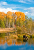 A moose, with color. (Jackpicks) Tags: road blue autumn trees sky reflection fall clouds bravo fallcolor moose wilson wyoming grandtetons grandtetonnationalpark mygearandme mygearandmepremium gpsetest