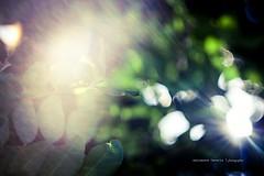 Good Morning (iSalv) Tags: light italy nature colors canon lens eos italia imac dof bokeh f2 ta colori 58mm maf pdc nationalgeographic helios mattina 444 massafra eostom42 1000d