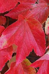 Herbst... (Melamar2012) Tags: elementsorganizer