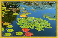 1121_374FL (davidben33) Tags: test nature brooklyn nikon jpg bbg brooklynpubliclibrary bpl d600