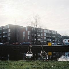 ... (minou*) Tags: park winter holland 6x6 film netherlands amsterdam rollei rolleiflex 2011