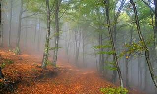 Lanzo d'Intelvi, Bosco del Meriggio - Ottobre 2012