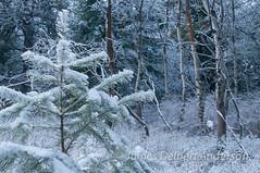 Snowy Kamiak Forest II (jamesdelbertanderson) Tags: kamiakbutte kamiakbuttecountypark whitmancounty palouse pnw washington nature snow winter easternwashington inlandnorthwest