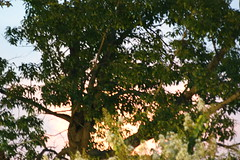 DSC02275 (wpnsmech555) Tags: harekrishnas hare krishnas