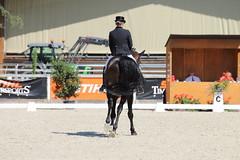 IMG_7619 (dreiwn) Tags: dressage dressur dressuur pferd reitturnier turnierreiten pferdesport horse horseback horseriding equestrian reitverein dressurprfung kandare doublebridle reiten pferde reitplatz ridingarena