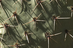 Cactus Spines (mstoy) Tags: cactus pant prickleypear spines albuquerquebiopark newmexico
