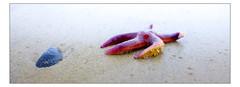 DSCF0192 copie (sylvainbachelot) Tags: baule pornichet plage sable mer ciel vague matin soir soleil mauijim coquillage toile de bord lumire mlancolie fujix70 panorama nature
