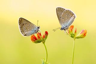 Diamonds of Nature...