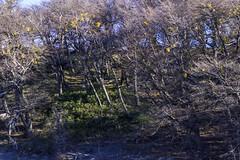 Lago Grey (Medigore) Tags: chile tree forest road cielo medigore canont3i aire libre arena serenidad campo paisaje montaas ngc montaa nubes azul landscape cima ladera rbol planta