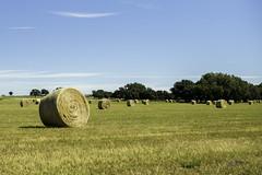 Wide open bales (DustinJ05) Tags: leica m typ240 50mm f14 f1 summilux wide open hay field sky grass fence twine string wire