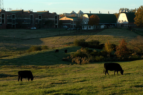 College of Veterinary Medicine pastures