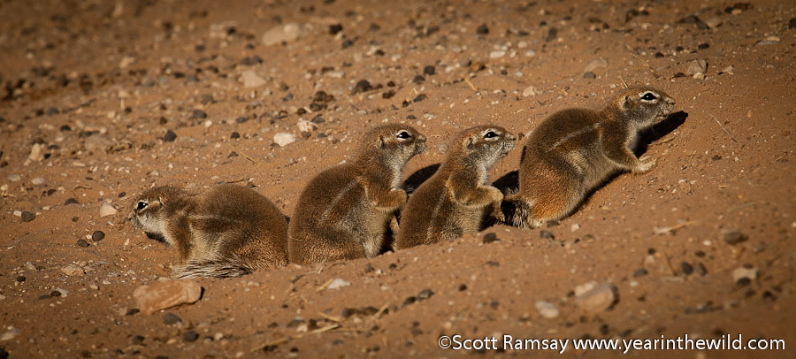 Kgalagadi Transfrontier Park - South Africa