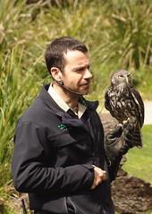 Healesville Sanctuary, Barking Owl (G Bayliss) Tags: australia healesvillesanctuary victoria barkingowl ninoxconnivens