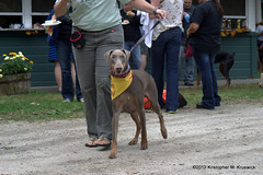 Handsome Boy 2 (kmkruswick) Tags: dru dog doberman dobie 2012 fallpicnic dobermanrescueunlimited