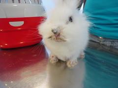 DSC03006 (Hospital Veterinario Taco. Santa Cruz de Tenerife.) Tags: hospital conejo perro taco gato clnica mascota salud veterinaria piel sarna veterinario acaros dermatologa