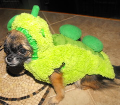Aww Sweet Pea! (doggievogue) Tags: pictures california nyc autumn dog chicago newyork cute green fall dogs fashion fun photo illinois newjersey midwest funny texas florida pics pennsylvania september sweetpea peas today westcoast doggie eastcoast 2012 phots dogclothes petsanimals dogfashion doghoodie doghalloweencostumes doggievogue