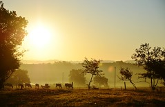 Good Morning II (Tinina67) Tags: morning autumn light summer sun france field cows farm country meadow tina hibernate quietness paddock gers tinina67