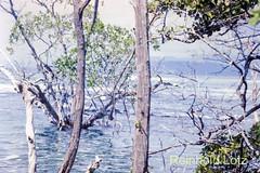 Galapagos-191 (Reinhold.Lotz) Tags: santacruz ecuador galapagos ecu inseln bahiatortuga