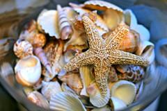 Shells in a Jar (Read2me) Tags: stilllife shells beige dof starfish many 11e cye 3waychallengewinner 15challengeswinner friendlychallenges thechallengefactory herowinner superherochallengewinner storybookwinner storybookchallengegroupotr pregamewinner gamesweepwinner agcgsweepchallengewinner agcgsweepwinner